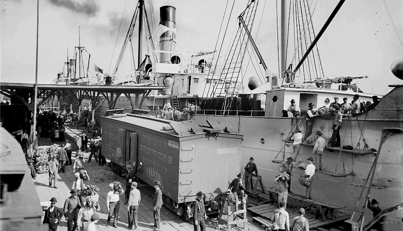 Workers unloading bananas in New Orleans, ca. 1903. Photo courtesy of the Library of Congress photographic archives