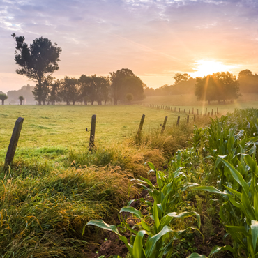 rural farm landscape with sunrise or sunset